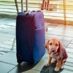 Lost dog next to a suitcase at an airport
