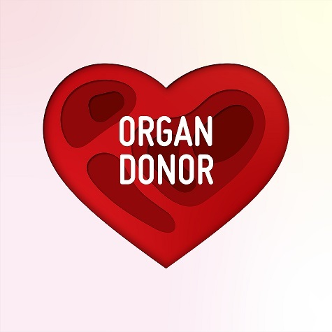 Organ Donor Paper Cut Concept with Heart Shape