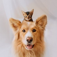 happy mixed breed dog posing with a kitten on his head